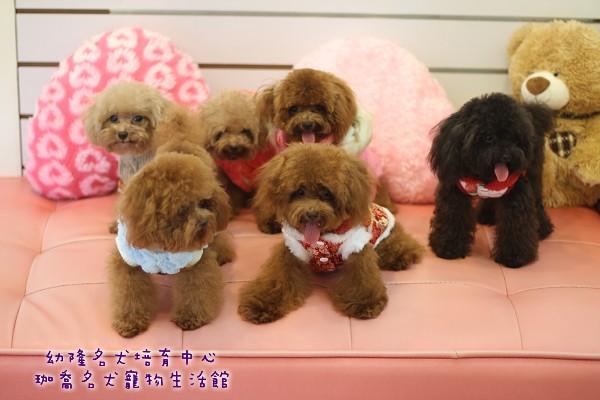 cartoon teddy bears